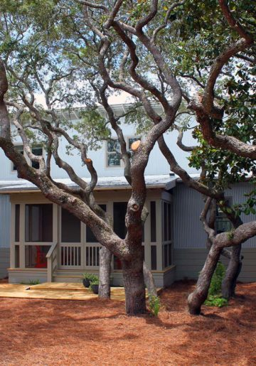 Try Something Fun and New in Grayton Beach! Try Over the Moon!